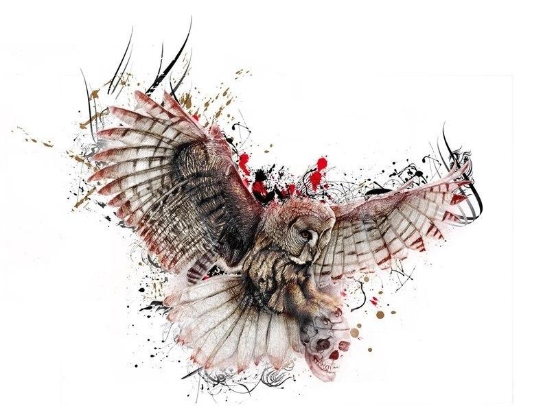 эскиз совы (2)