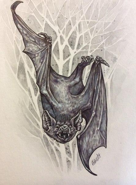фото эскиз летучая мышь