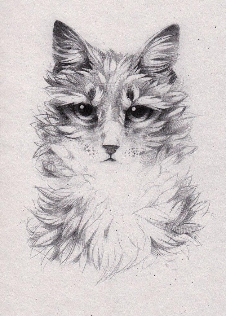 Картинки эскизы котов